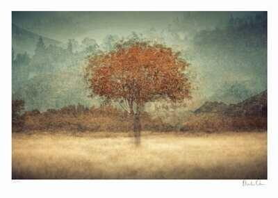 Aura | Ltd Ed (15) | Martin Osner