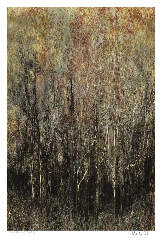Carbon Woodlands | Ltd Ed | Martin Osner