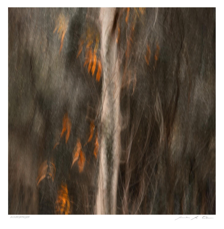 Autumn Impression | Samantha Lee Osner