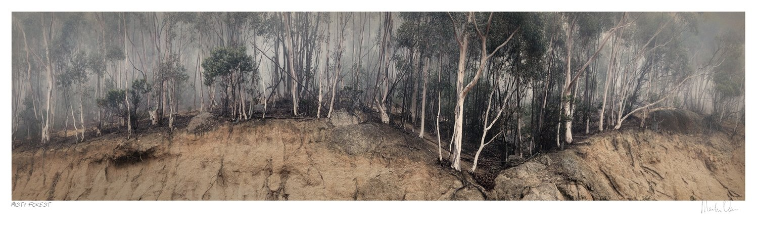Misty Forest - Table Mountain | Martin Osner