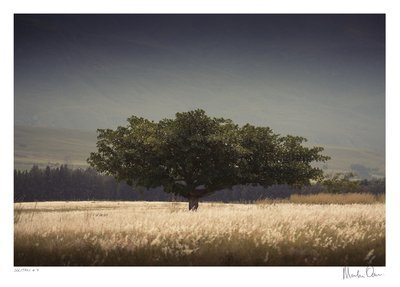 Solitary No.4 | Martin Osner
