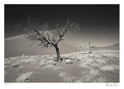 Solitary No.12 | Martin Osner