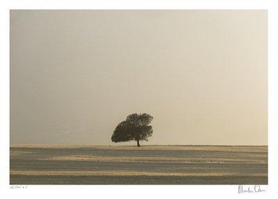 Solitary No.17 | Martin Osner