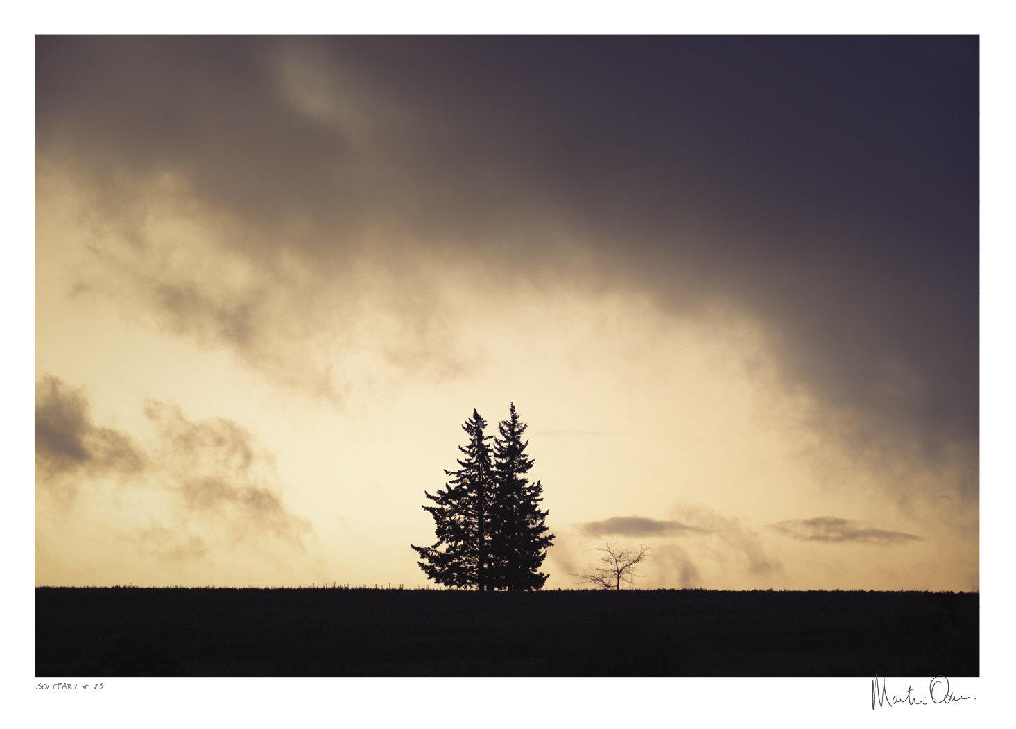 Solitary No.23 | Martin Osner