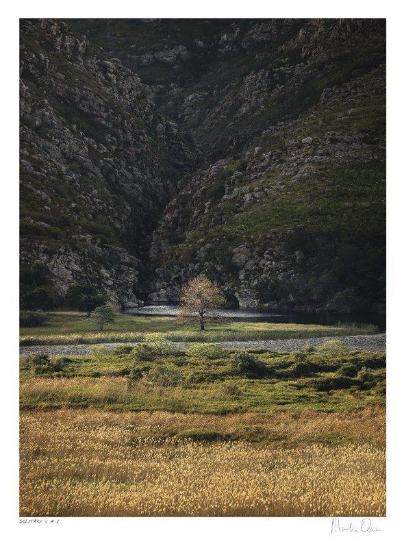 Solitary Vertical Collection No.2 | Martin Osner