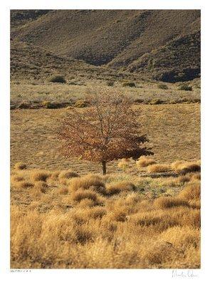 Solitary Vertical Collection No.5 | Martin Osner