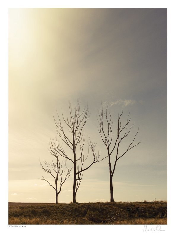 Solitary Vertical Collection No.6 | Martin Osner