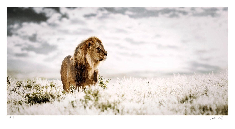 Pride of Africa | Ltd Ed | Klaus Tiedge