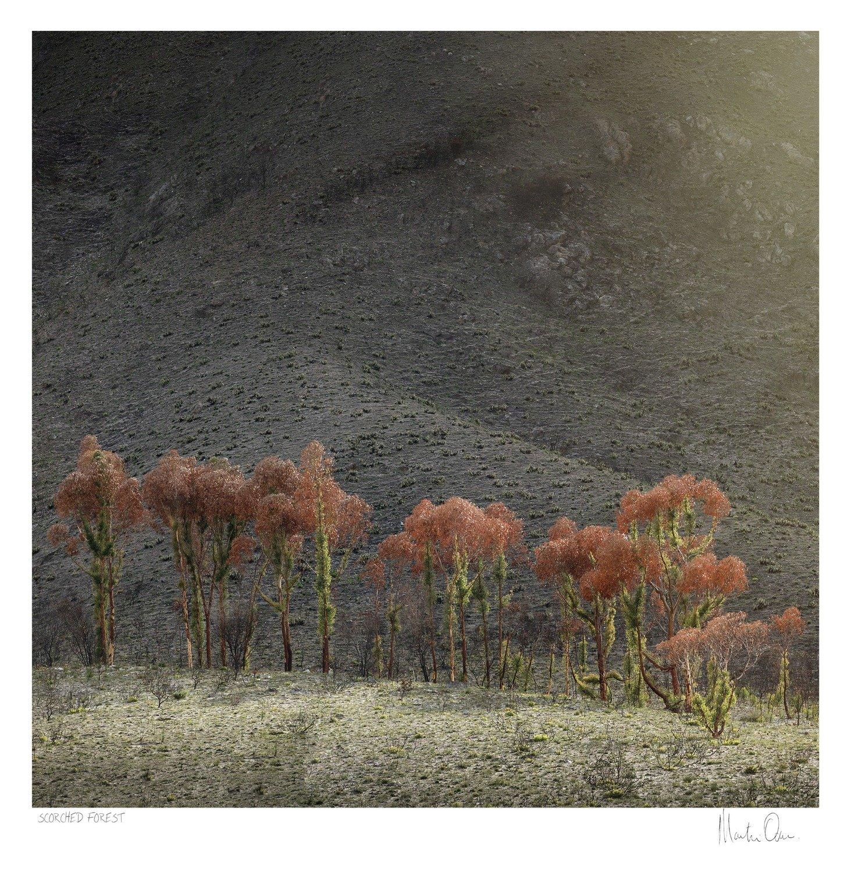 Scorched Forest | Martin Osner