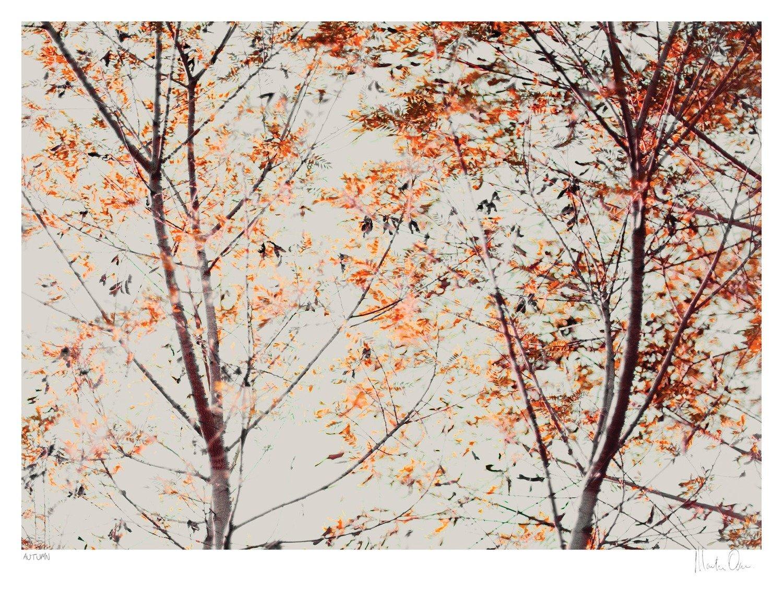 Autumn | Martin Osner