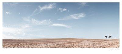 Rural Pattern | Samantha Lee Osner