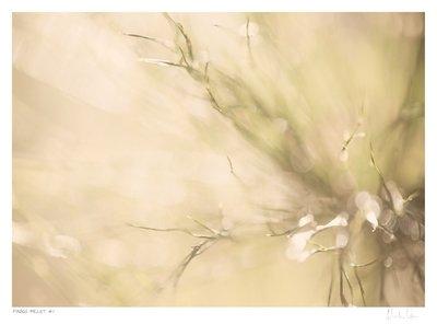 Fynbos Pallet No.1 | Martin Osner