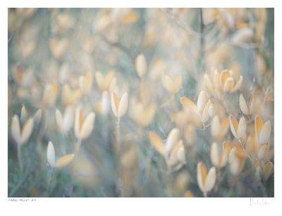 Fynbos Pallet No.4 | Martin Osner