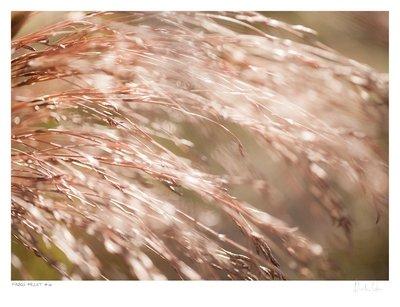 Fynbos Pallet No.6 | Martin Osner