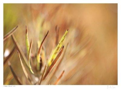Fynbos Pallet No.9 | Martin Osner
