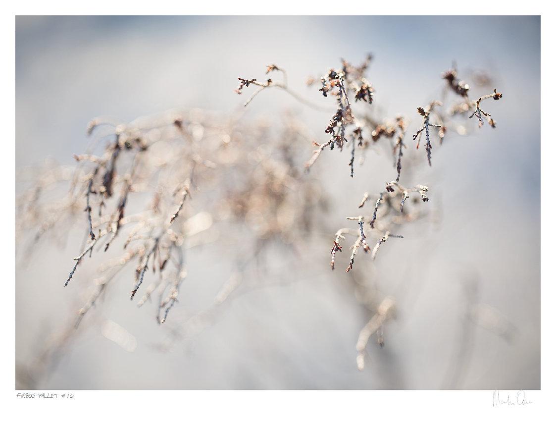 Fynbos Pallet No.10 | Martin Osner