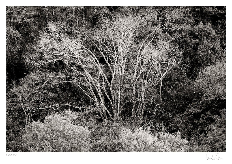 Ivory No.2 | Martin Osner
