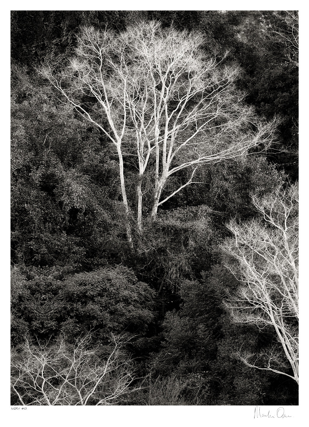 Ivory # 1 | Limited 35 | Martin Osner