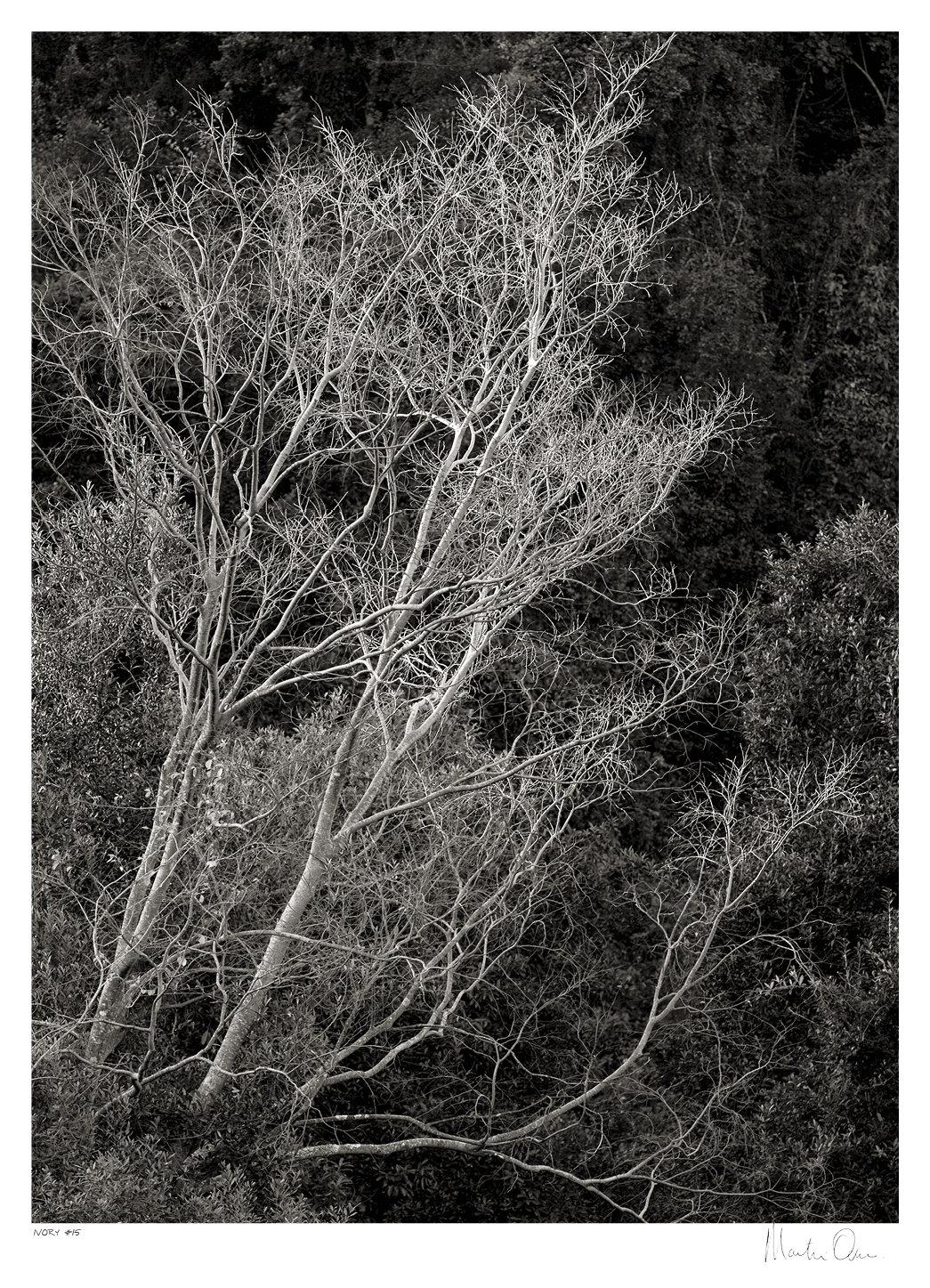 Ivory No.15 | Martin Osner