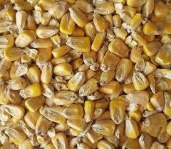 Gladfield Maize malt $5.52 per kg