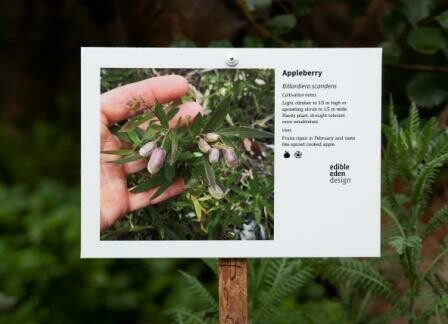 Bush food plant ID signs, from