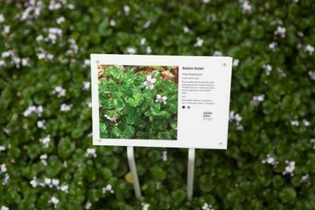 SALE - Small Interpretive Bush Tucker Plant ID Signs - Metal