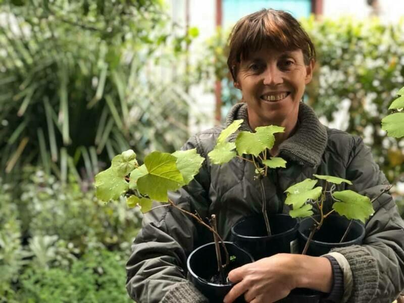 Currant grape vine - unnamed backyard variety - pick up Shepparton