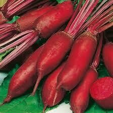 Beetroot, Cylindrica