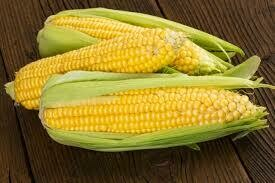 Corn, Jolly Roger, Open Pollinated