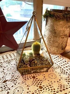 Gold Cactus Terrarium