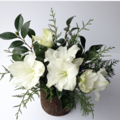 WHITE AMARYLLIS IN TIMBER VASE