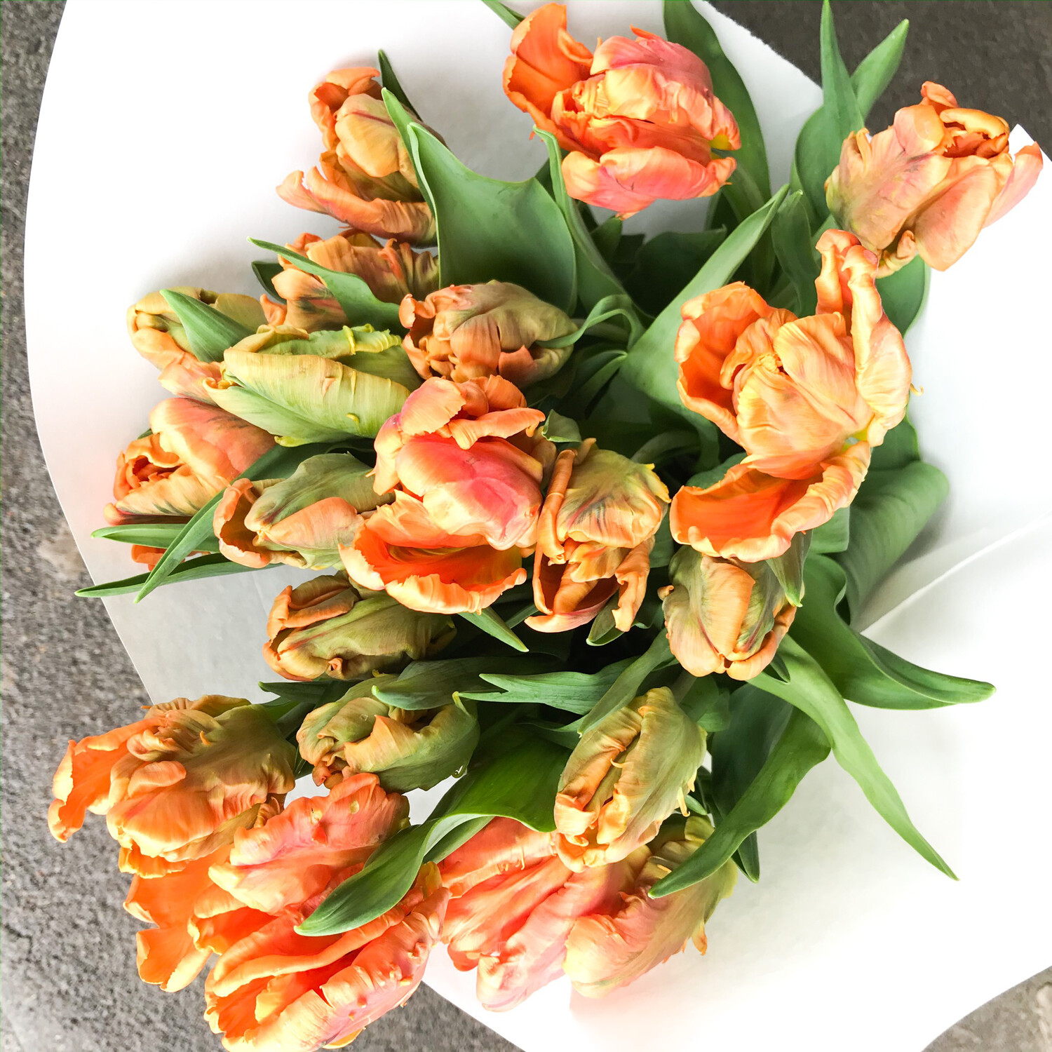 TULIPS! LOOSE WRAP (color options)