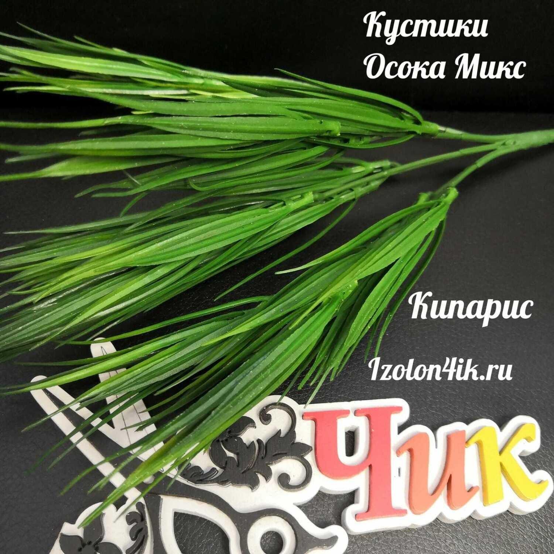 Куст ОСОКА  (Кипарис) О-1