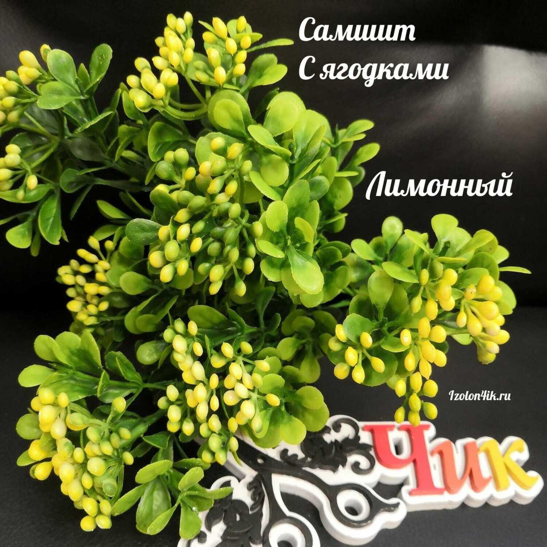 САМШИТ с ягодами (Лимонный) С-5