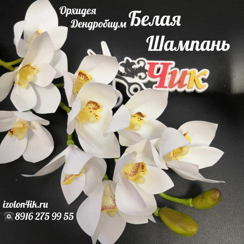ОРХИДЕЯ ДЕНДРОБИУМ ветка (Белая шампань) Д-4