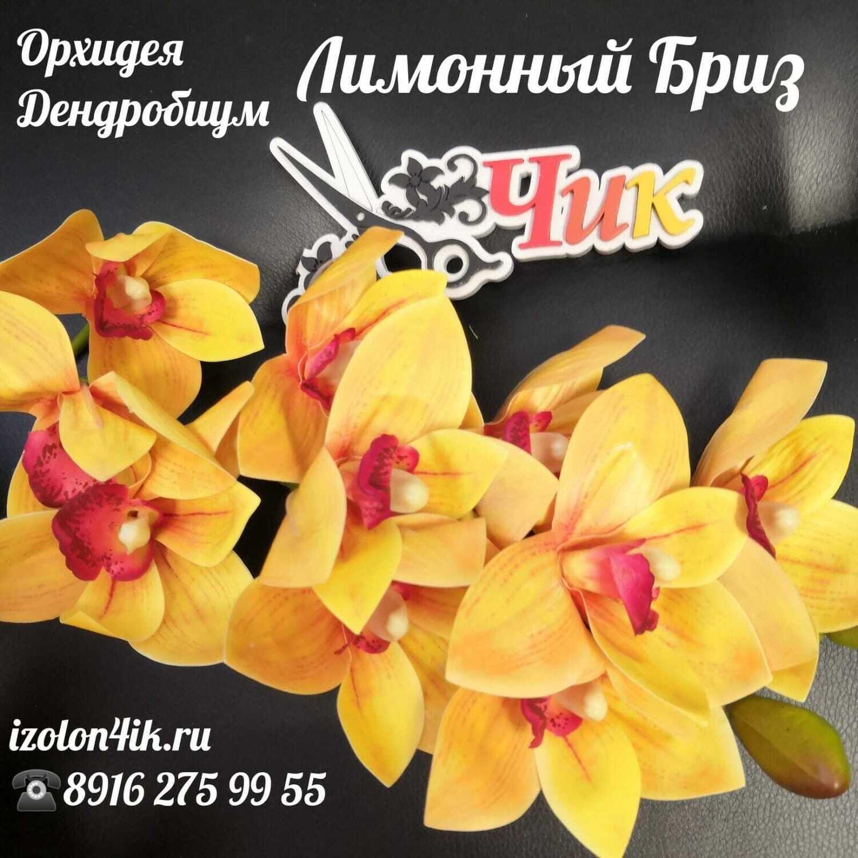ОРХИДЕЯ ДЕНДРОБИУМ ветка (Лимонный бриз) Д-5