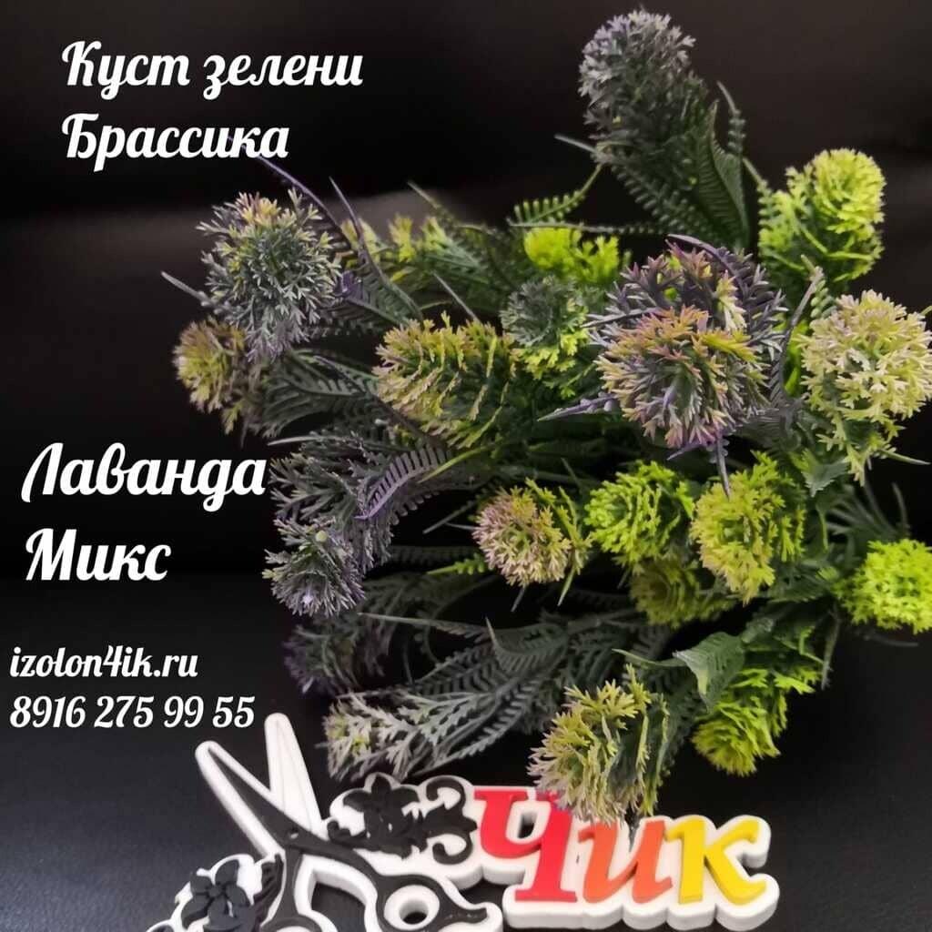 Куст зелени БРАССИКА (Лаванда микс) К-4