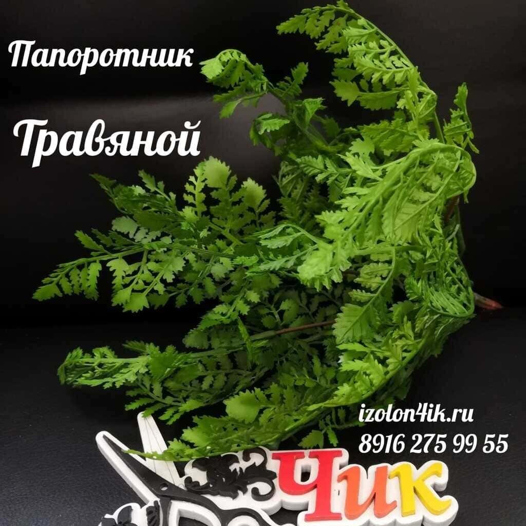 ПАПОРОТНИК (Травяной) П-1