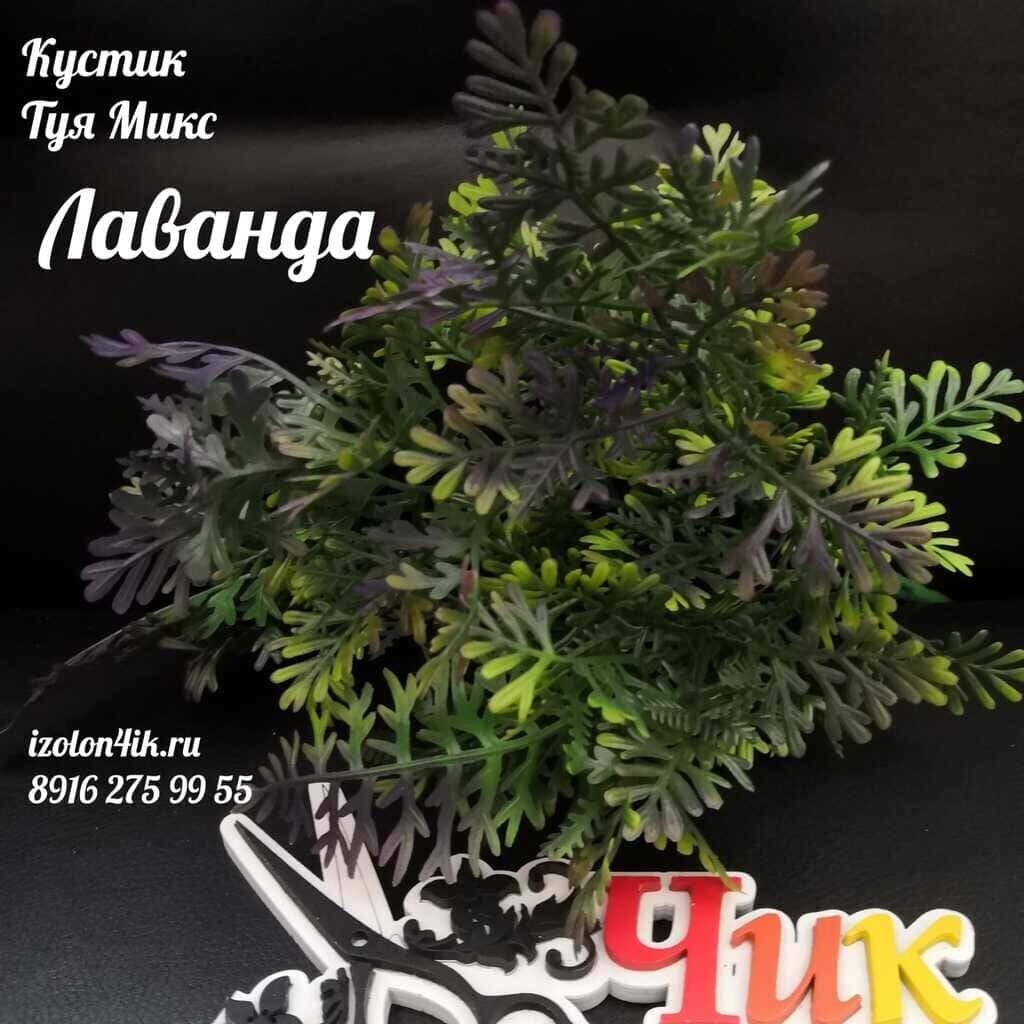 Куст ТУЯ (Лаванда) Т-1