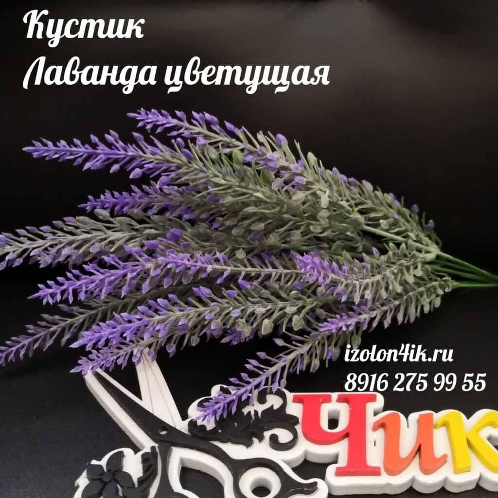 Кустик ЛАВАНДА цветущая Л-1