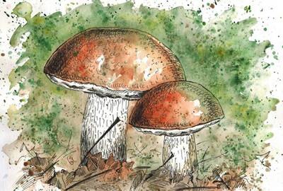 Mushrooms. Грибы