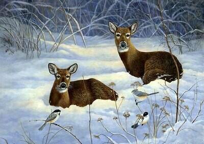 Roe deer in the snow