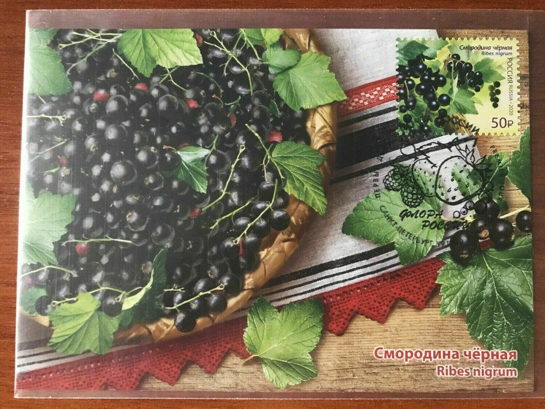Maximum Сard Russia 2020 currant berry