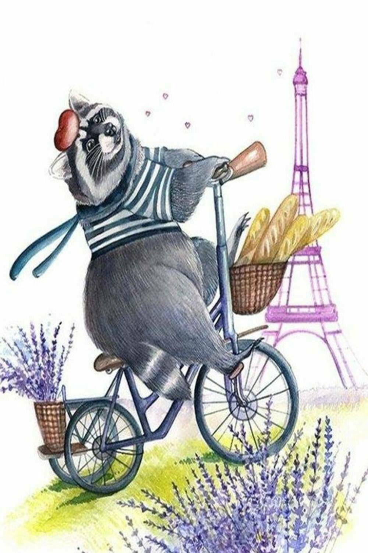 Raccoon on a bike Енот на велосипеде