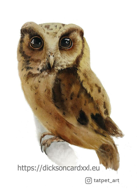 Owl  Совушка