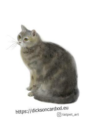 Cat  Кот