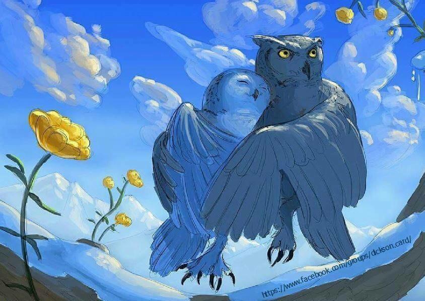 Owl. Совы - сладкая парочка