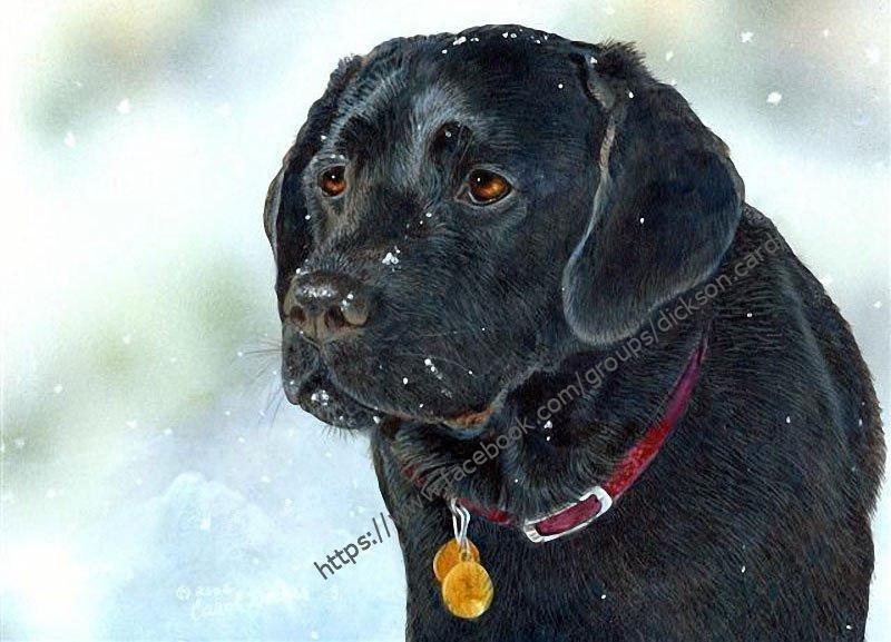 Postcard Dog with a medallion from © Carol Decker