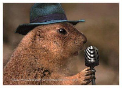 Beaver with microphone🐾