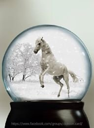 Snowy white horse in a ball